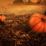 image of pumpkins in foggy autumn field